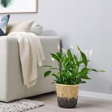 آنية نباتات, خيزران لون طبيعي/أسود15 سم